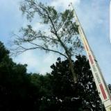 Ripley's A Tree Service