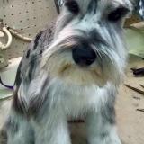 Canine Fashions Pet Salon