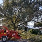 Terrells Tree Service