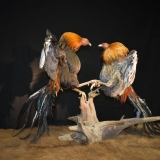 Top of Texas Taxidermy