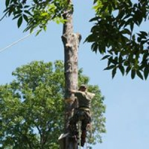 Southern Roots Tree Service