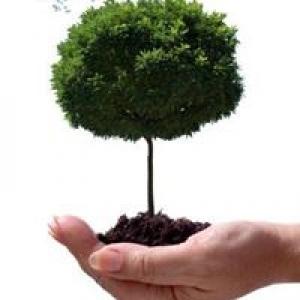 A+ Tree Service