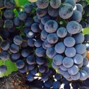 Arroyo Winery