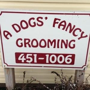 A Dogs Fancy