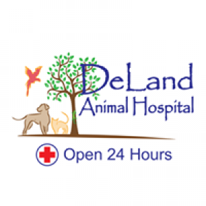 Deland Animal Hospital of Port Orange