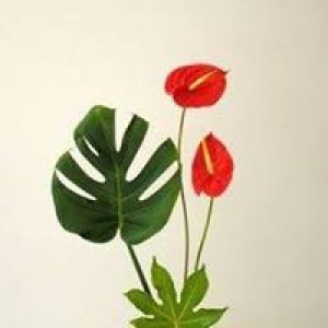 Anthurium Gardens Florists