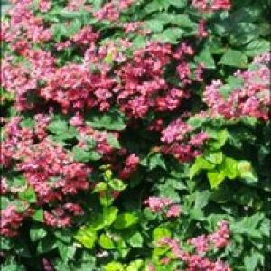 Always In Bloom Florist Inc
