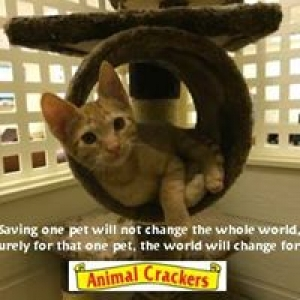 Animal Crackers for Pets