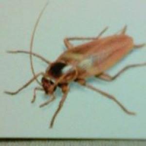 Andrews Termite & Pest Control