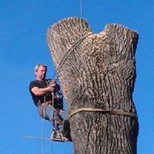 A-1 Expert Tree Service, LLC