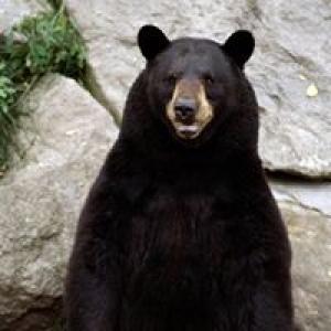 Bear Paw Spas