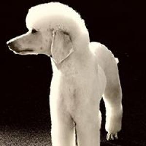 Ann's Canine Designs