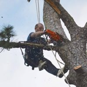 AAA Low Country Tree Service