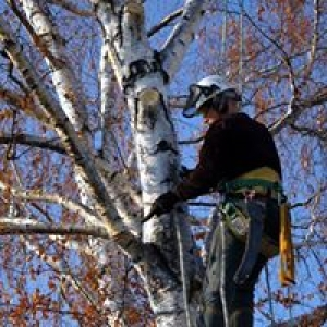 Mile High Tree Service