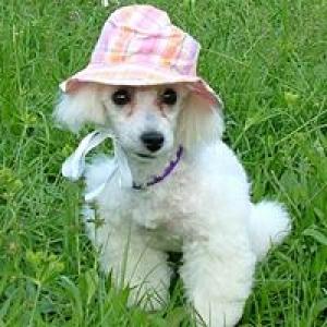 Gentle Touch Pet Grooming