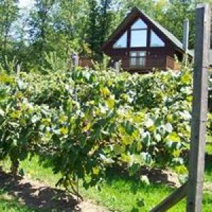 Bastress Mountain Winery