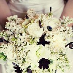 Amaryllis Floral Designs
