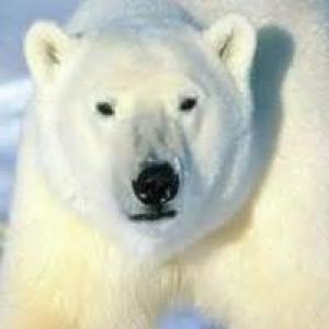 Polar Bear Automotive