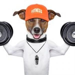 Atlanta Animal Rehabilitation & Fitness