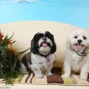 All Paws Animal Clinic Inc