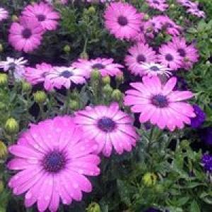 Alliance Floral Co