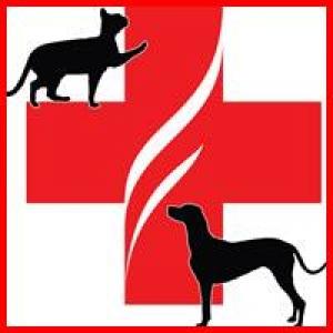 Animal Emergency Clinc