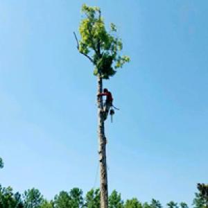 Big Dog Stump & Tree