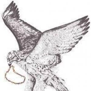Bead Hawk