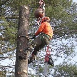 Southern NH Tree Service