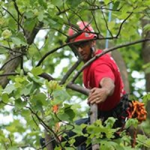 AAA Cumberland Valley Tree Service Inc
