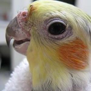 Bay Area Bird Hospital Inc