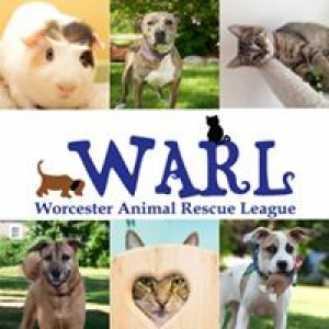 Worcester Animal Res