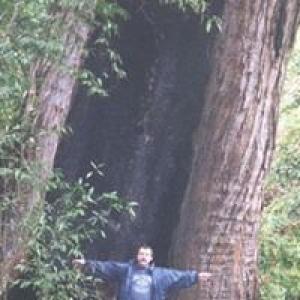 Cascadilla Tree Care