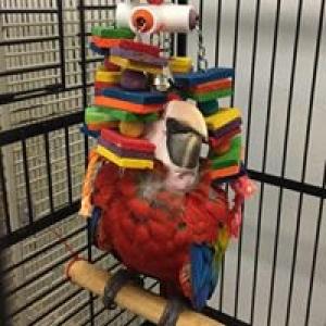 A Feathered Affair