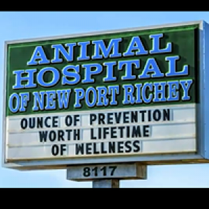 Animal Hospital of New Port Richey