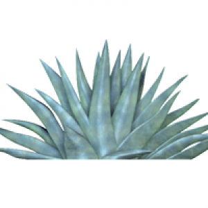 Agave Biosystems