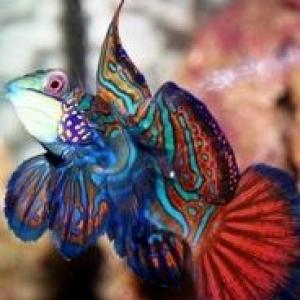 Aquarium Shoppe