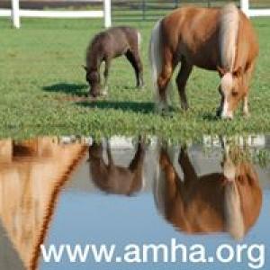 American Miniature Horse Association Inc