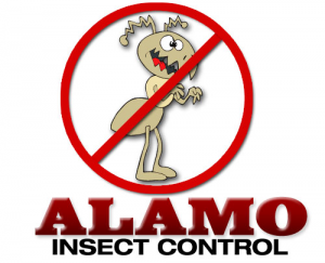 Pumpelly's Alamo Insect Control