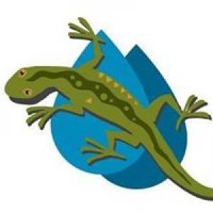 Green Lizard Landscape LLC