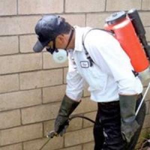 A-American Pest Control