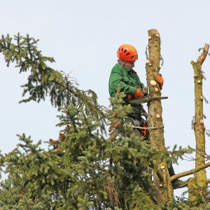 Oaks Tree Service