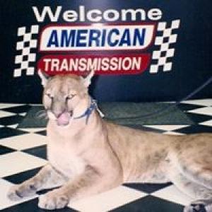 American Transmission