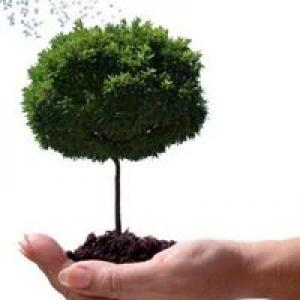 J V Tree Service