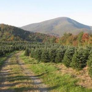 J & D Tree Farm