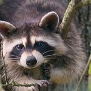 All Wildlife Animal Eviction