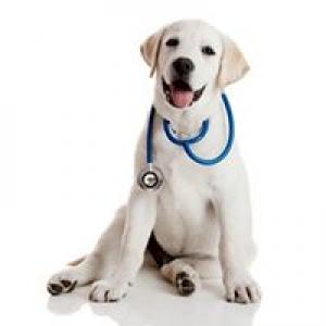 Alburnett Veterinary Service