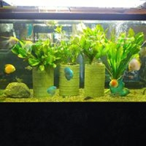 Advanced Aquarium Systems