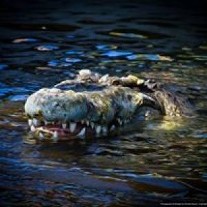 Alligator Adventure
