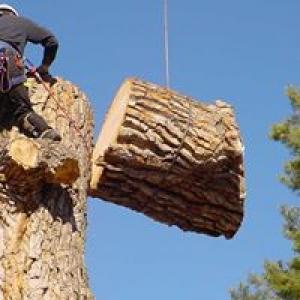J & C Tree Service